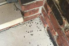 Bat Guano on Porch