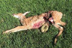 Dead Animal Retrieval