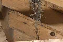 birds-nest2