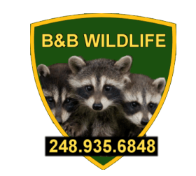 B&B Wildlife Removal Service