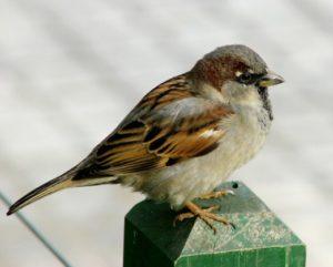 Bird Removal Detroit