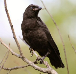 Bird Removal Detroit Michigan