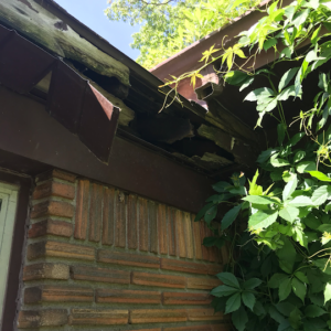 Dead Animal in Soffit / Overhang